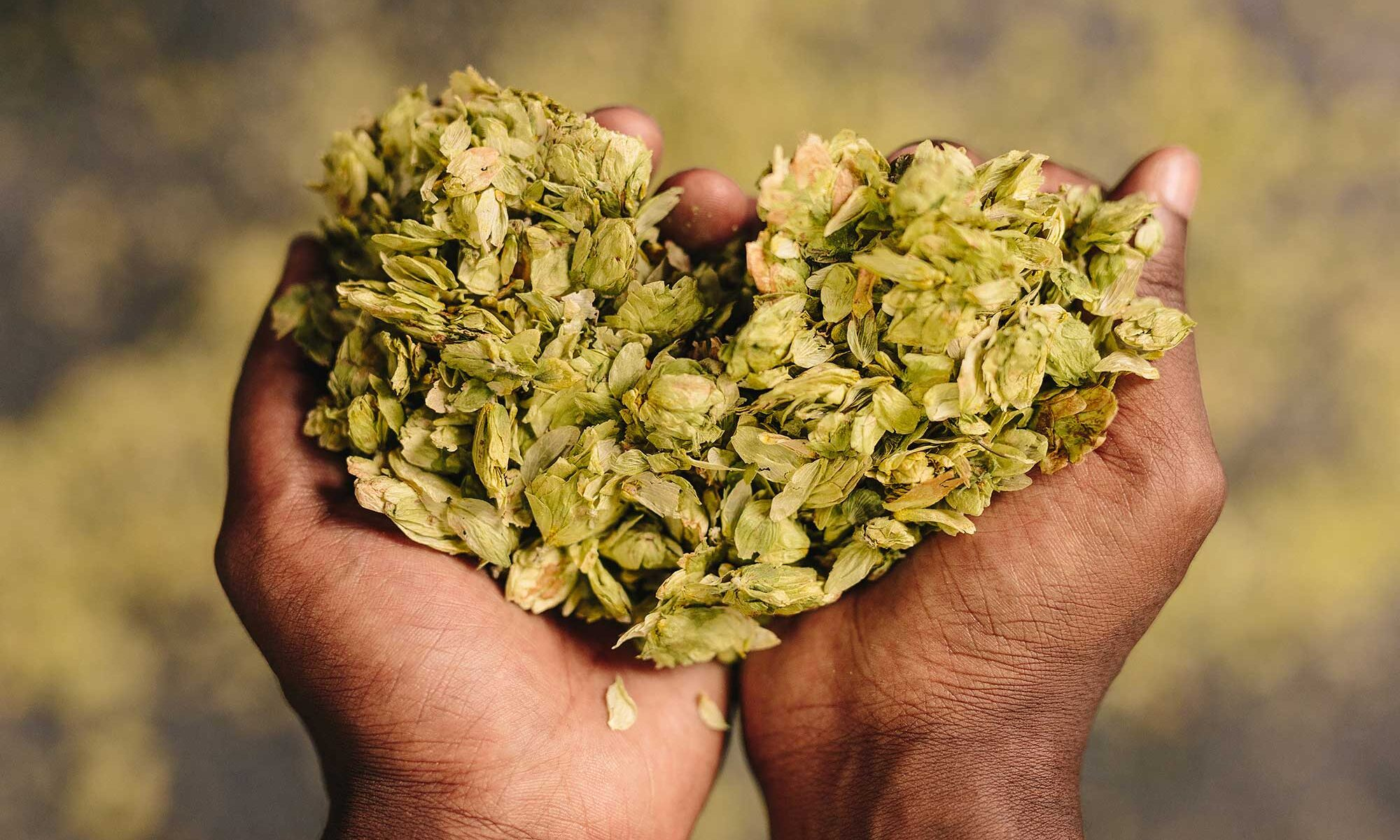 Beer Fact Friday Noble Hops